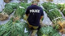 Albanska policija zaplijenila skoro 1,5 tonu kanabisa