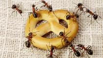 Riješite se muha, mrava, crva i raznih insekata u nekoliko koraka