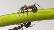 Kako se riješiti mrava, žohara, buba i komaraca