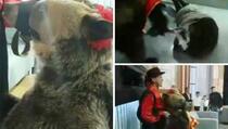 Nervozni medvjed ščepao ženu ispred televizijskih kamera