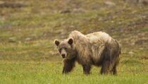 Avion ubio medvjeda na pisti prilikom slijetanja