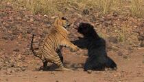 Nevjerovatna borba ratobornih zvijeri