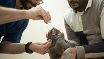 Potvrđen prijenos korone sa čovjeka na životinje: Nakon zaraze uginula mačka