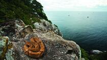 Jezivi otok zmija: Na njemu živi vrsta čiji otrov otapa ljudsko meso