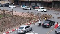 Šokirani vozači svjedočili divljem obračunu dvije velike grupe majmuna