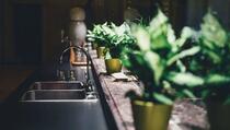 Dva genijalna trika: Kako da vam biljka 'preživi' dok ste na odmoru