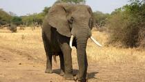 Evo kako izgleda kada slon upadne u kuću