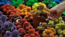 Ako želite da vam u braku i porodici vlada harmonija, nemojte u dom unositi ove biljke