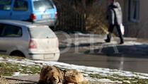 Vlasnici životinja na Kosovu od 10. marta u obavezi da registruju svoje ljubimce