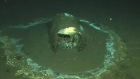 """Istraživali morsko dno pa otkrili hiljade buradi: """"Ono što smo vidjeli je bilo zapanjujuće"""""""