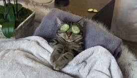 Hit na društvenim mrežama: Mačak i njegov gazda uživaju u spa tretmanu