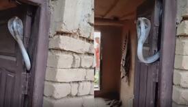 Kobra ih dočekala doslovno na vratima, strašnijeg čuvara kuće još nismo vidjeli