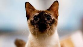 Snimila mačku nekoliko sekundi prije zemljotresa, pogledajte šta je napravila