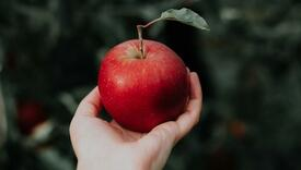 Pet razloga zašto su jabuke dobar saveznik u mršavljenju