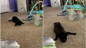 """Urnebesan video kruži na Instagramu: Mačka snimljena u ulozi """"agenta 007"""""""
