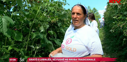 Berba malina u Donjem Ljubinju: Od 4 sata ujutro, prije dnevnih vrućina (VIDEO)