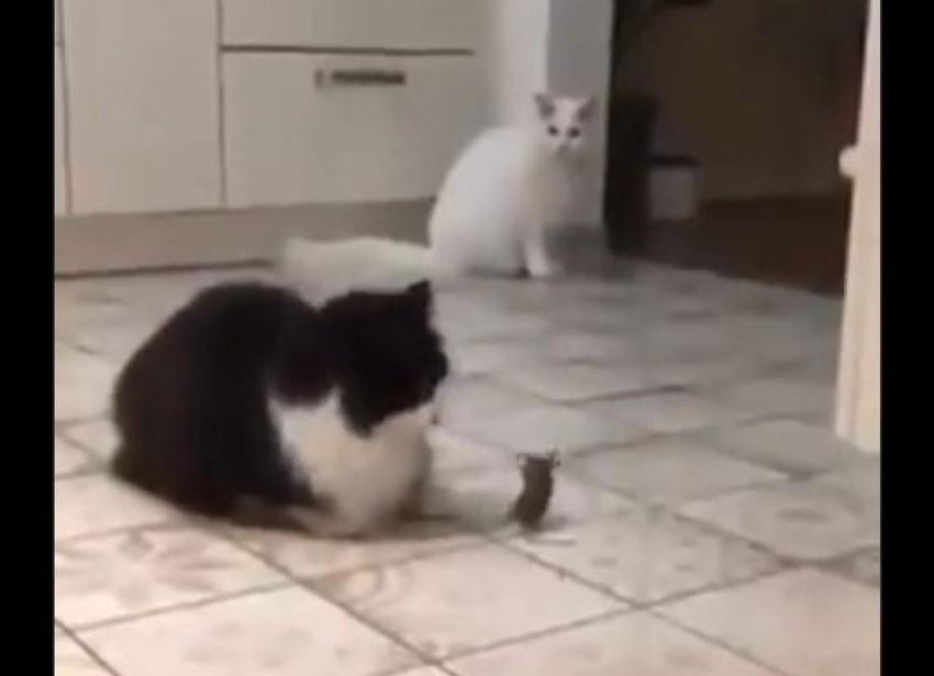 Urnebesan video